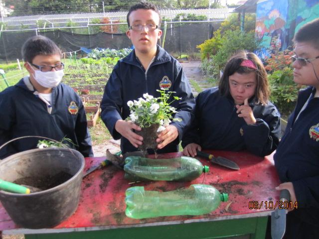 Preparando las plantas